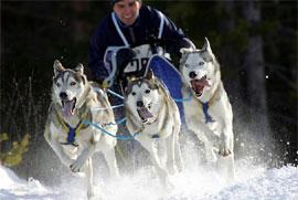 schlittenhunderennen in warmensteinach im fichtelgebirge